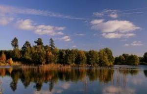 Jezioro, w tle las