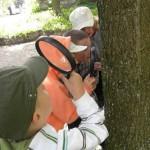 Dzieci badają korę drzewa przy użyciu lupy