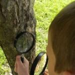 Dziec badają korę drzewa przy użyciu lupy