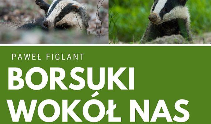 """Plakat wytawy fotograficznej Pawła Figlanta """"Borsuki wokół nas"""", na plakacie 4 zdjęcia z borsukami"""