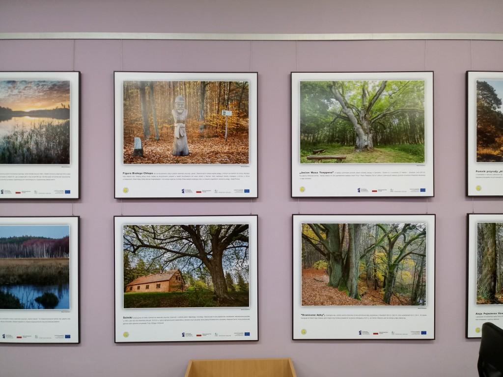 4 plansze przedstawiające drzewa w lesie